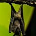 Small photo of Batty