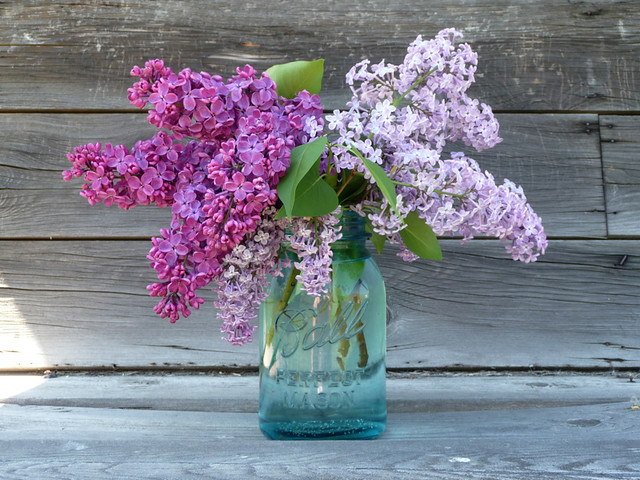 Lilacs in a Blue Ball Jar