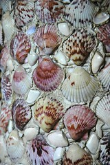 sea snail(0.0), seafood(0.0), conch(0.0), petal(0.0), animal(1.0), clam(1.0), molluscs(1.0), marine biology(1.0), seashell(1.0), cockle(1.0), clams, oysters, mussels and scallops(1.0),