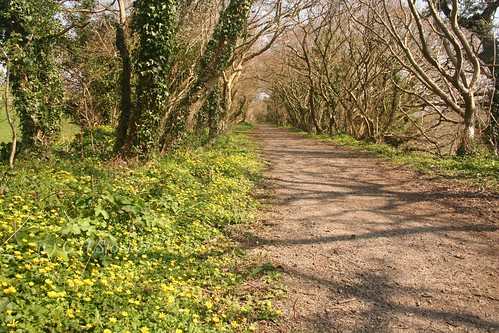 The Newham Trail (Old Newham Branch Line - Truro) by Stocker Images