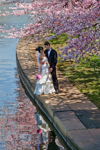 Bride and Groom by Cherry Blossom Trees and Pond