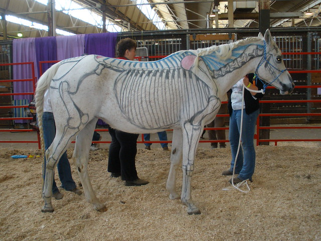 Visible Horse - Skeleton