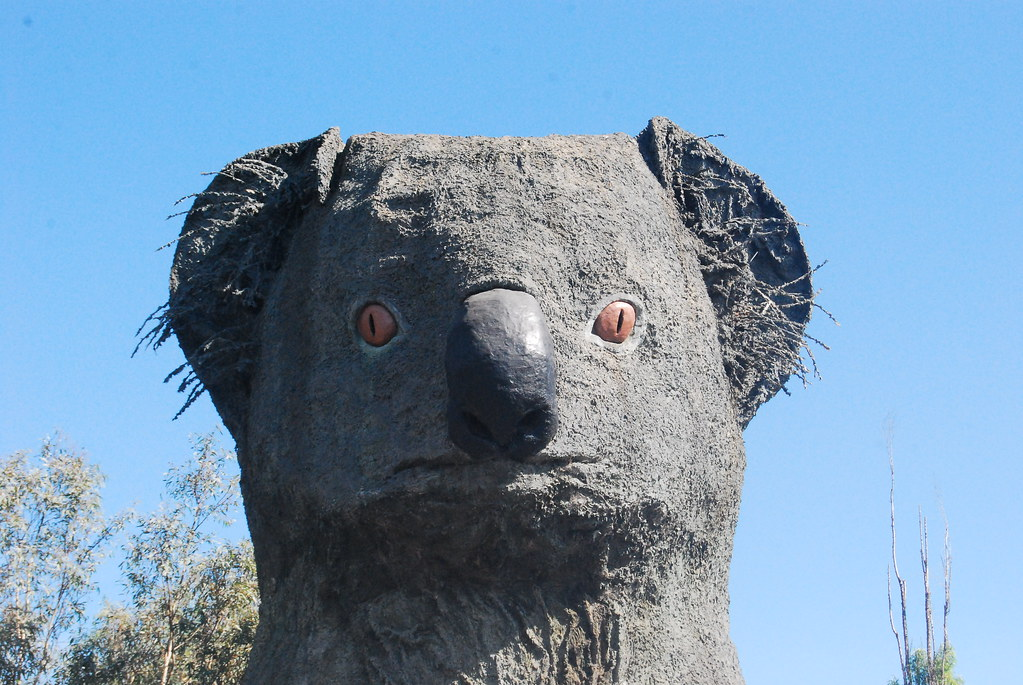 Giant Koala - Close Up