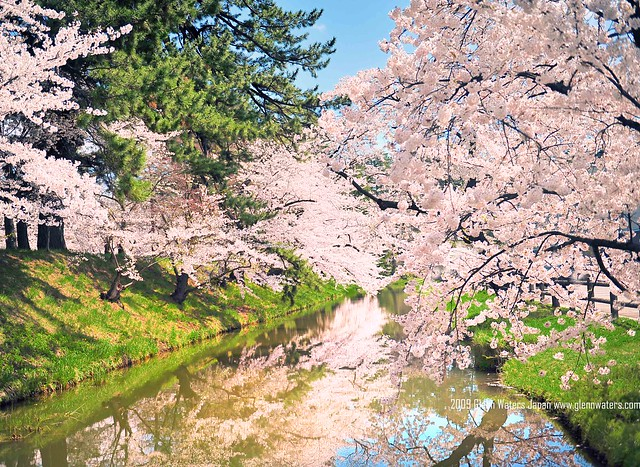 Sakura Moat (Hirosaki Japan). © Glenn Waters. (Explored)  Over 3,500 visits to this image.   Thank you.
