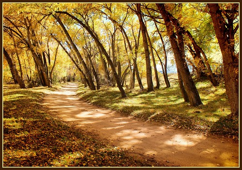 road autumn fall composition gold colorado path trail winding leaning huerfanocounty