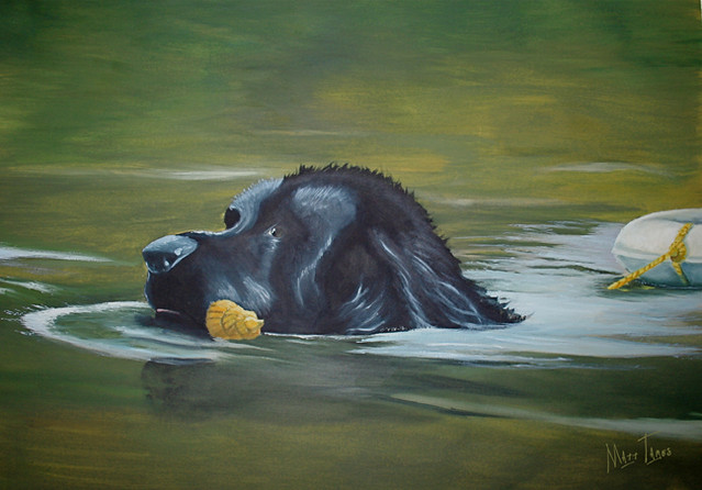 Newfoundland Dog Swimming | Flickr - Photo Sharing!