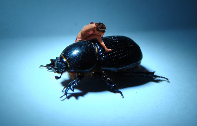 Escarabajo Gigante Giant Beetle Flickr Photo Sharing