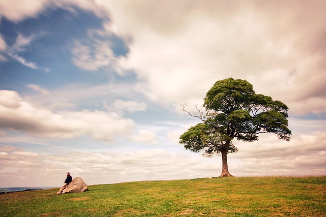 Lyme Park's lonely tree