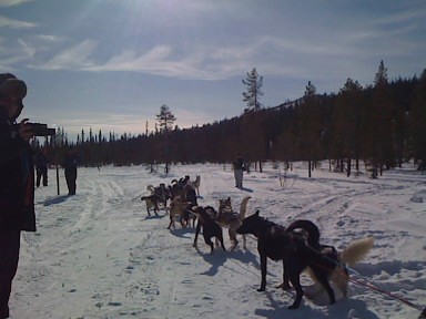3391722273 db006e7717 Dog sled safari in Olos, Finland