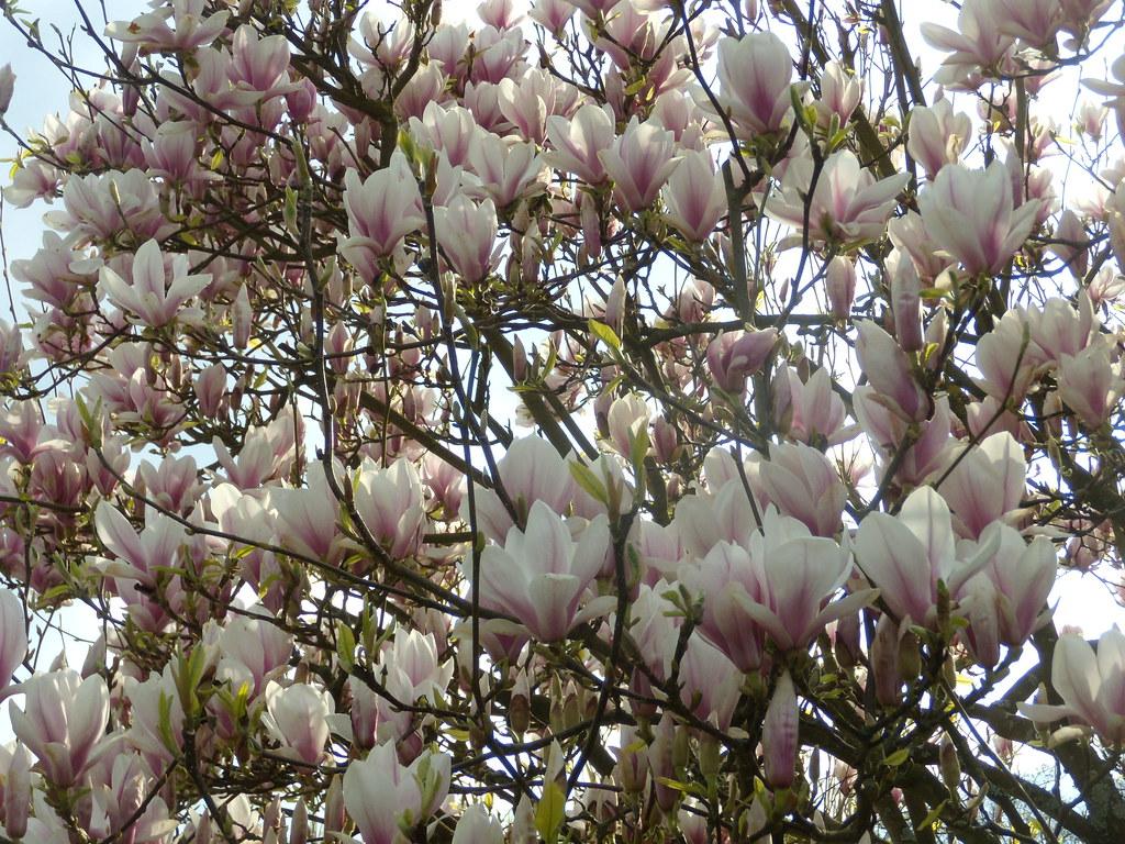 Magnolia Marlow Circular