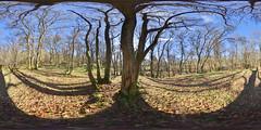 Mugdock: Mugdock Woods 8 Milngavie Scotland Equirectangular