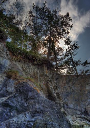 bridge tree geotagged under bank shore whidbeyisland deceptionpass soe hdr janusz leszczynski fidalgoisland shakingthetree 010751 geo:lat=48403979 geo:lon=122648326