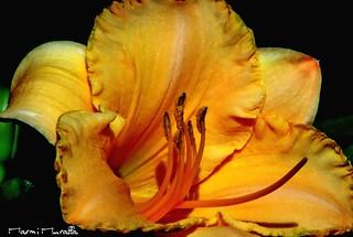Lunes, otra flor...