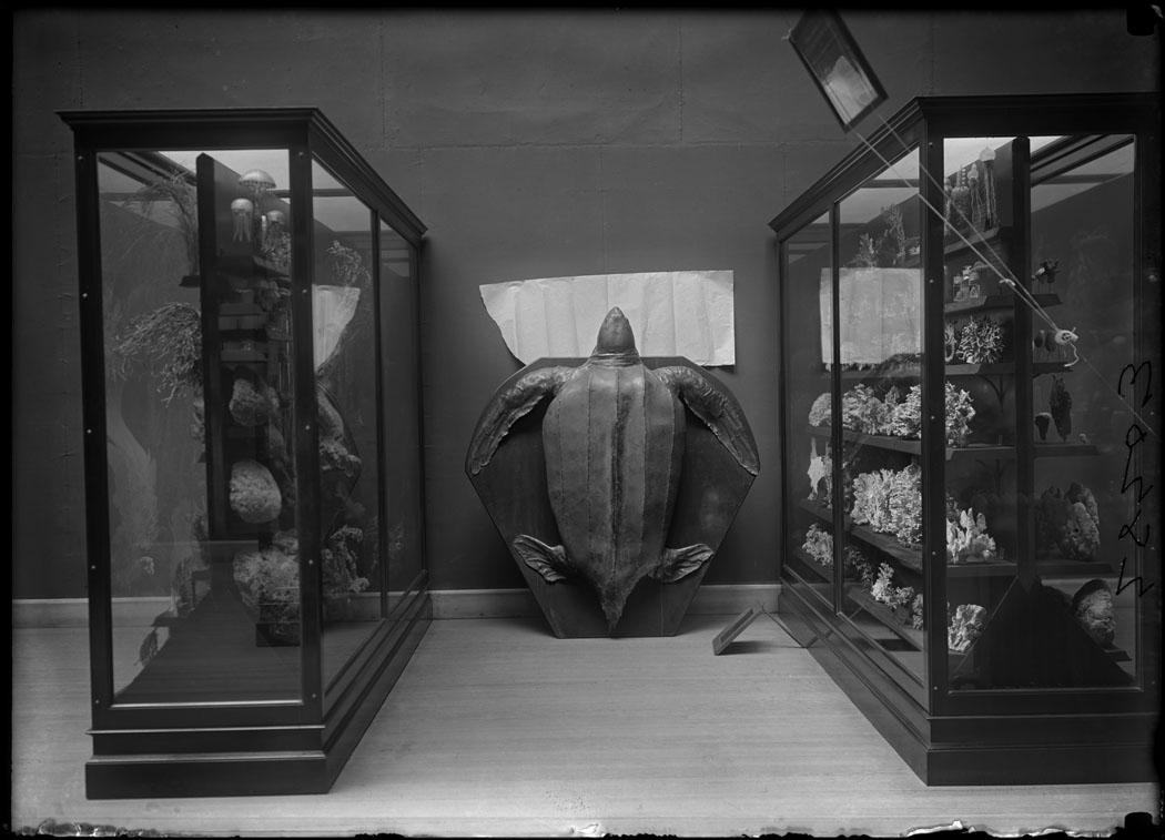 Leatherback turtle model