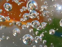 dew(0.0), flower(0.0), glass(0.0), moisture(0.0), liquid bubble(1.0), drop(1.0), water(1.0), macro photography(1.0), close-up(1.0),