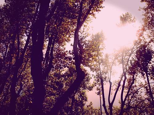 .vintage trees.