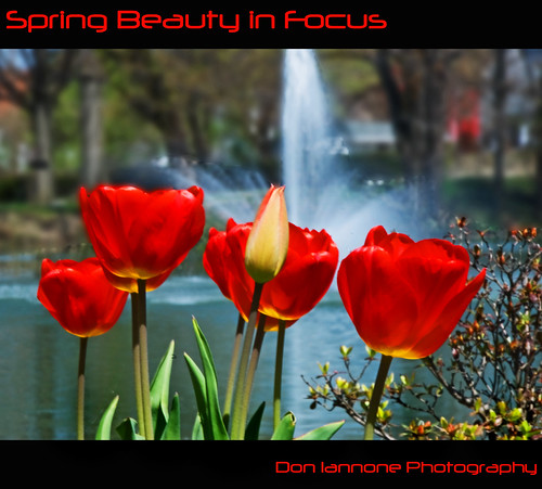 Spring Beauty in Focus