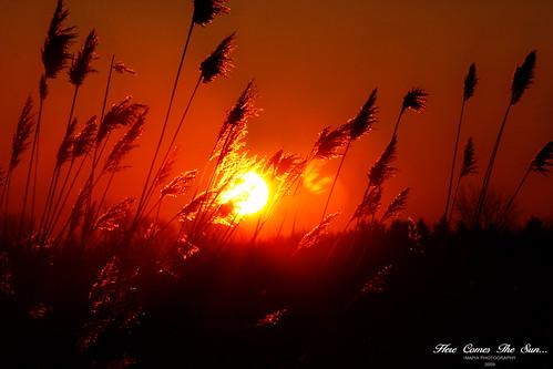 morning sun canada art nature sunrise canon photography soleil photo bravo foto photographie image quebec québec matin leverdesoleil imapix gaetanbourque vosplusbellesphotos imapixphotography gaëtanbourquephotography