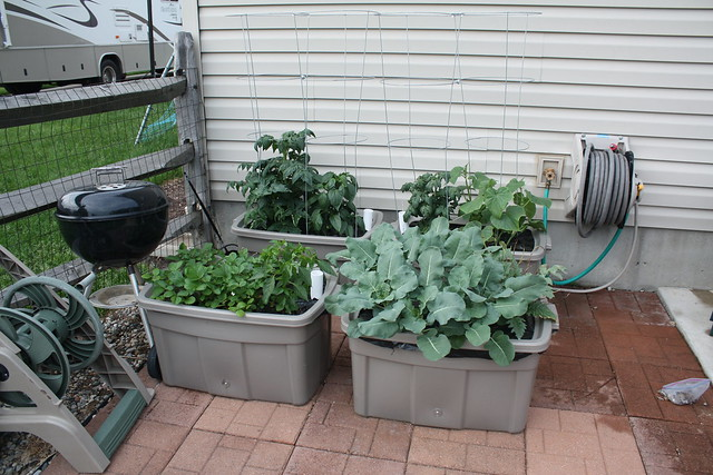 My hybrid hydroponic container garden flickr photo sharing - Hydroponic container gardening ...