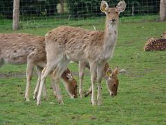 vicuã±a(0.0), white-tailed deer(0.0), wildlife(0.0), animal(1.0), deer(1.0), fauna(1.0), guanaco(1.0), musk deer(1.0),