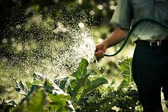Watering Plants Image - Garden Centre Online