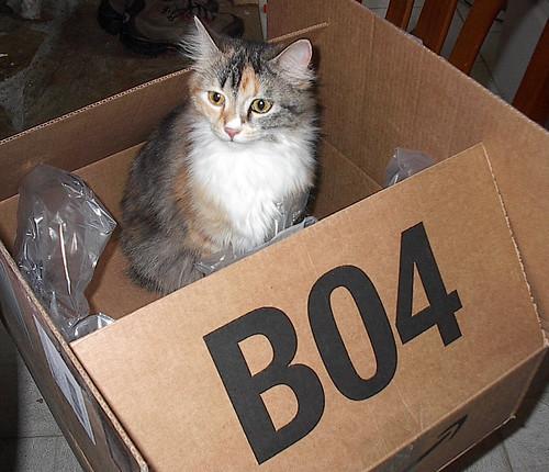 Fenestra in a box