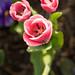 Tres Tulips