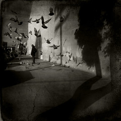 Pigeons and Shadows