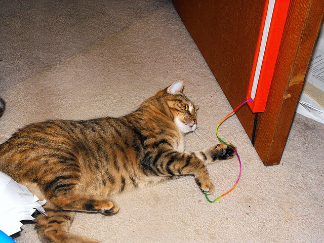 Fling String Cat Toy Sting Replacement