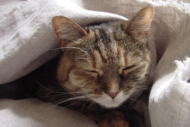 Cozy Mollie