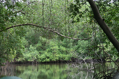 Caroni Bird Sanctuary in Trinidad and Tobago