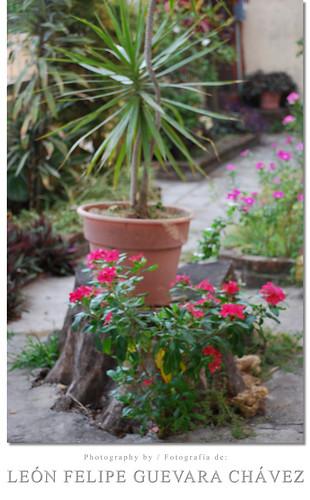 flowers flores garden mexico tamaulipas mx jardín ciudadmadero