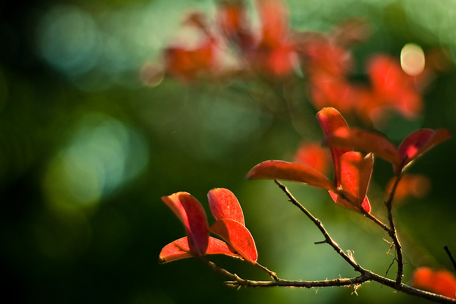 Photo - Imagenes de colores calidos ...