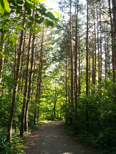 Waldpark Blasewitz fliegen  Lerchen hoch in die Lüfte prüfet der Kelche Klang, ein Gott soll sein im edeln Wein, erlöset den Gott einmal und trinkend lauschet des Herzens Wort 015