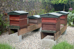 backyard, apiary, beehive,