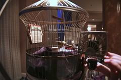 the amazing fortunebird