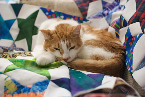 Quilt sprint, night #4: Sleeeeepy.