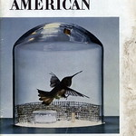 1953 january Scientific American