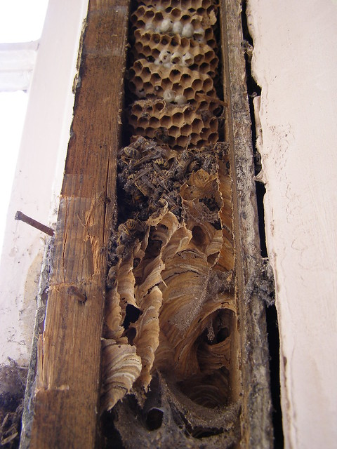 how to kill a eeropean wasp nest in the ground