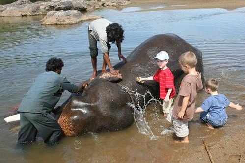 Washing an elephant Bheemeshwari