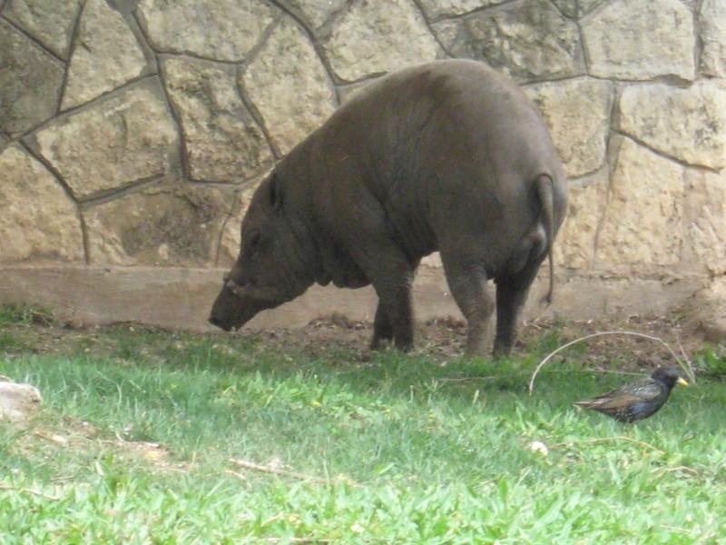 Zoo62