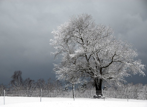 snow tree rural landscape farm northcarolina nikkor18200mmvr bitzcelt