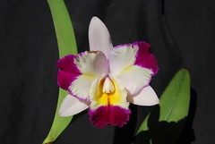 Blc.Tsutung Beauty