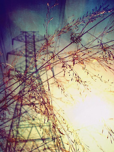light summer sun plant macro art texture industry nature grass sunshine composition vintage season outside photo wire flora shiny industrial shine cross bright artistic bokeh expression background seasonal picture pic cable pointandshoot powerline process delicate setting ekler asja hbw oldschooldigital olympusfe280 soloha