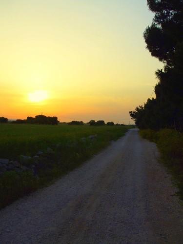 sunset panorama grass alberi tramonto view country campagna erba sole terra albero rosso puglia luce sud ulivi murgia bucolico rurale