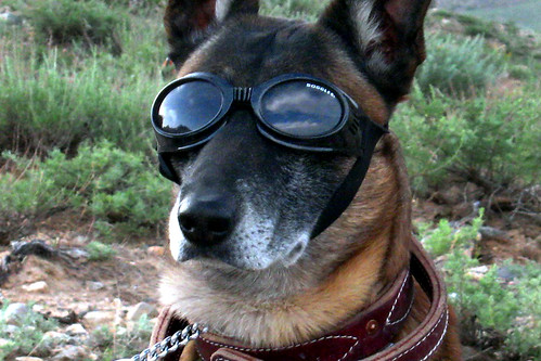4621703638 8fab4684cf Doggles for military working dog