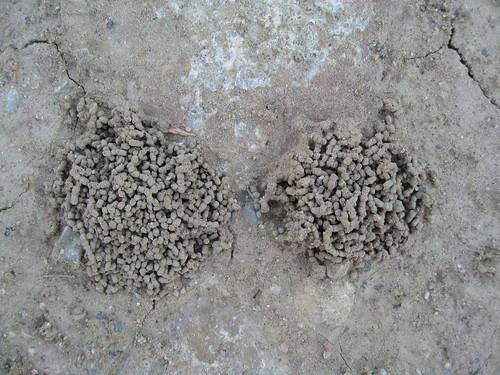 Ant Hillls