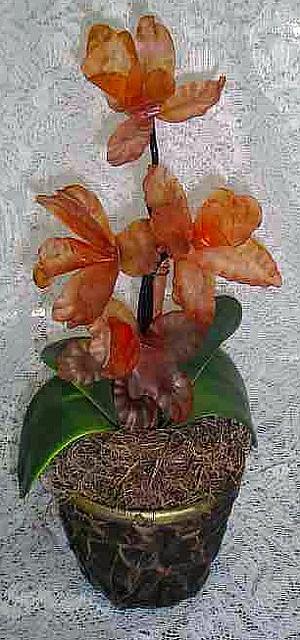 Orquídeas. Vanessa Belisário