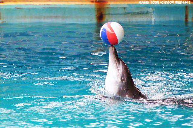 海豚顶球 | flickr –