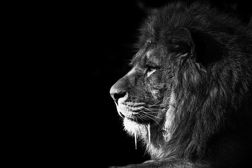 Lion King BW